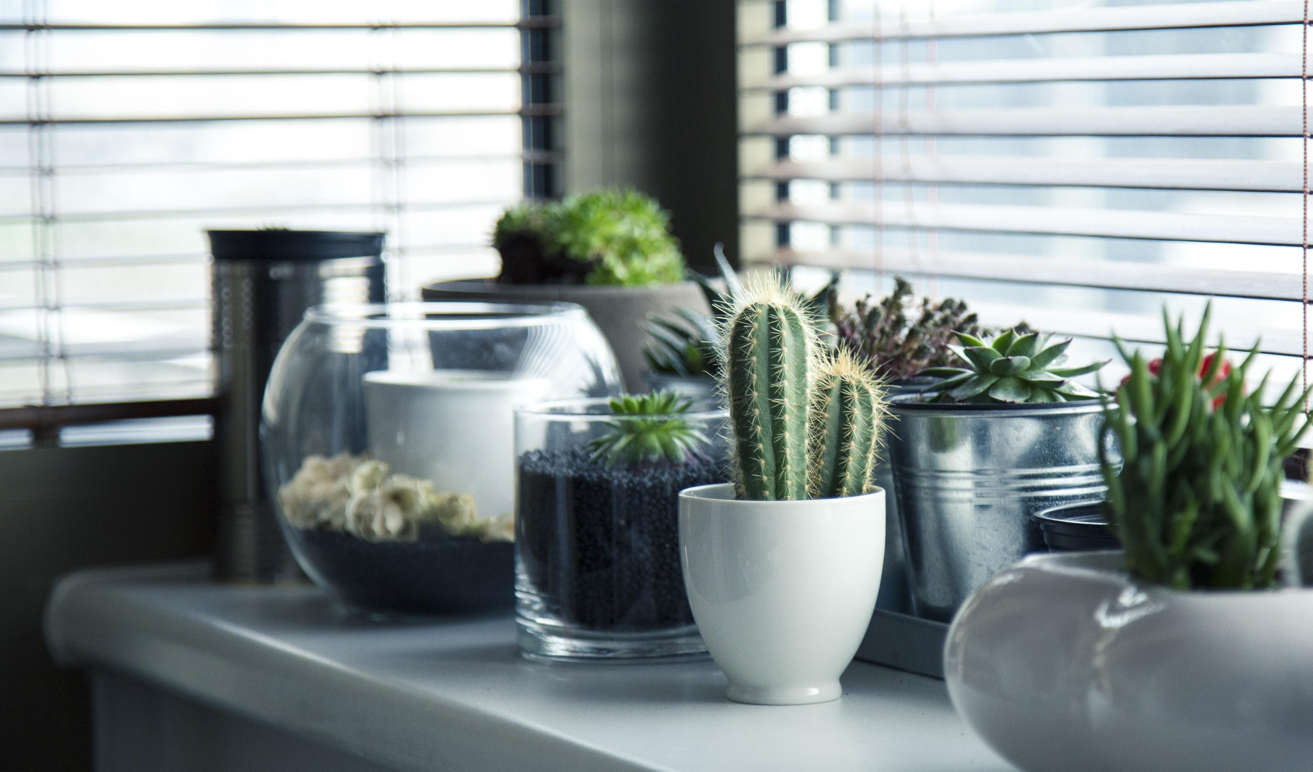 Badkamer-Planten-Excellentwonenleven